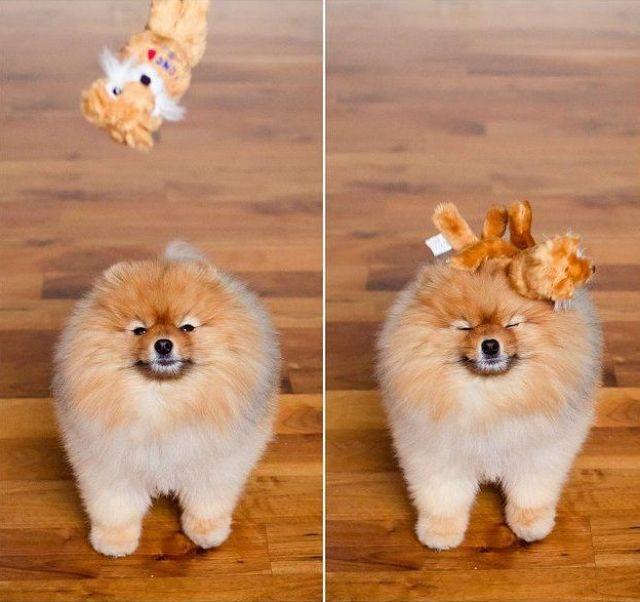 犬の反射神経